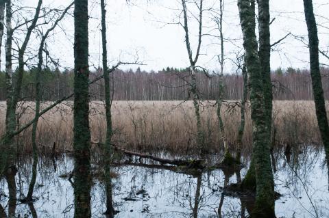 Luonnonperintösäätiö Järvenranta Luonnonsuojelualue