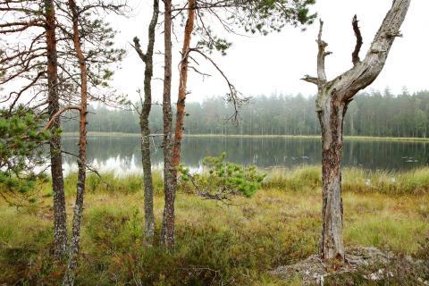 Partioaitan metsä Keidas Luonnonperintösäätiö