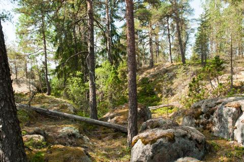 Luonnonperintösäätiö Kruunuvuori Luonnonsuojelualue