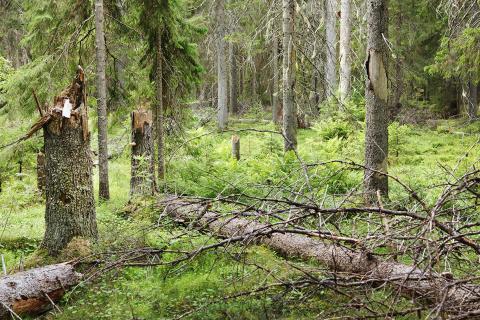 Luonnonperintösäätiön suojelualue Losonvaara