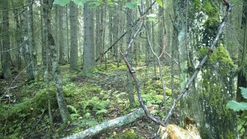 Metsänsisus Karhusuon lähellä