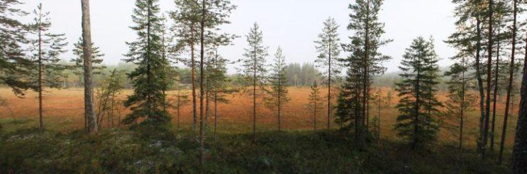 Metsän ja suon panoraama. Kuva: Jari Seppälä