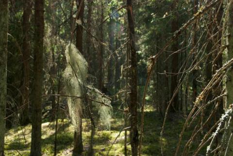 Yli-Myllyn metsää Lopella. Kuva: Mikko Hovila