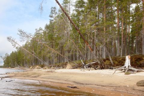 Luonnonperintösäätiö Niemenkangas Suojelualue