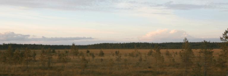 Heininevaa Pohjanmaalla. Kuva: Teemu Tuovinen.