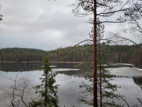 Luonnonperintösäätiö Rotkovuori suojelualue Jämsä