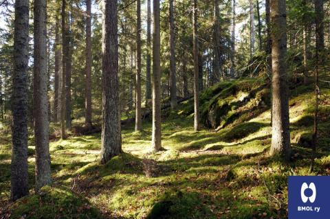 Kasvatuksen metsä BMOL