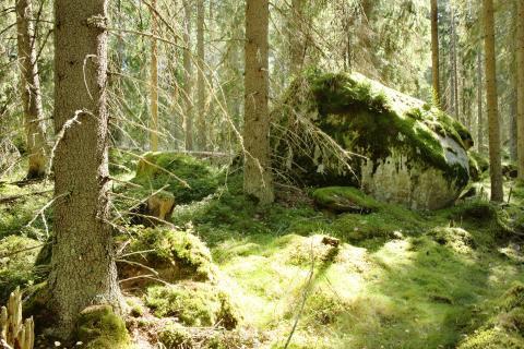 Luonnonperintösäätiö Tiitiäisen metsä suojelualue