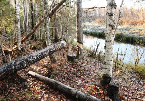 Luonnonperintösäätiön suojelualue Nauruniemi