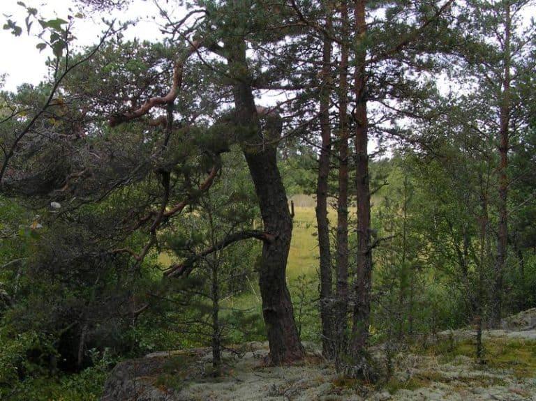 Suon itäreunan kallioista metsää.