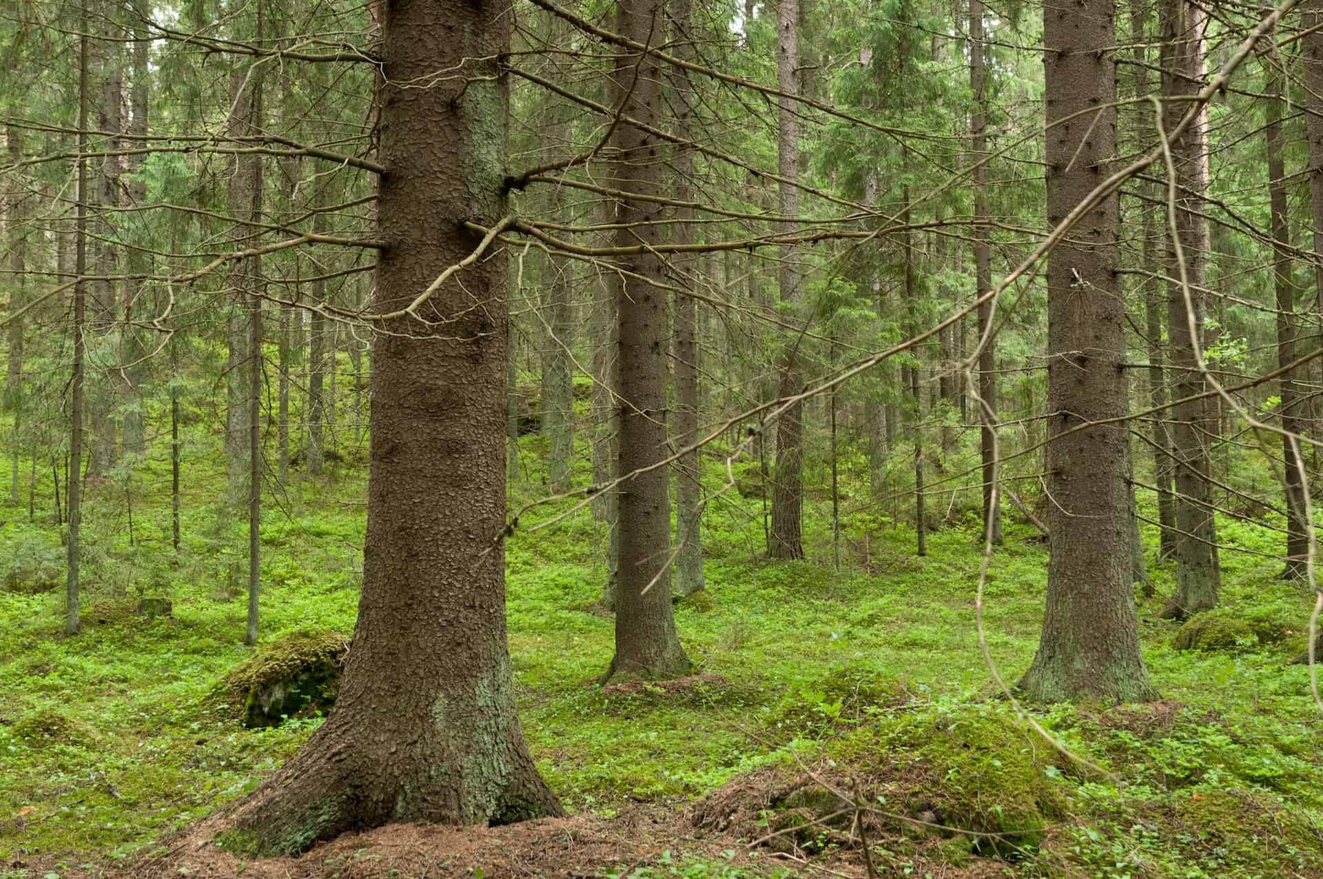 Pyssynkangas. Kuvaaja: Mikko Hovila