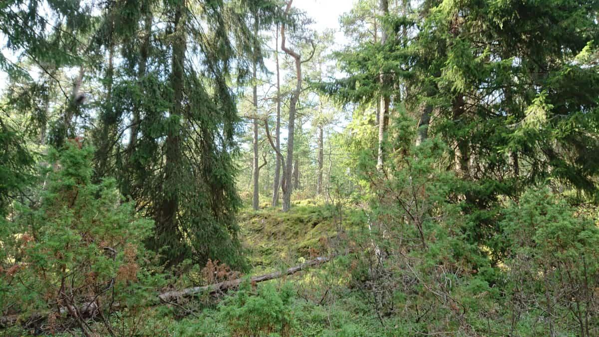 Gästansin metsä