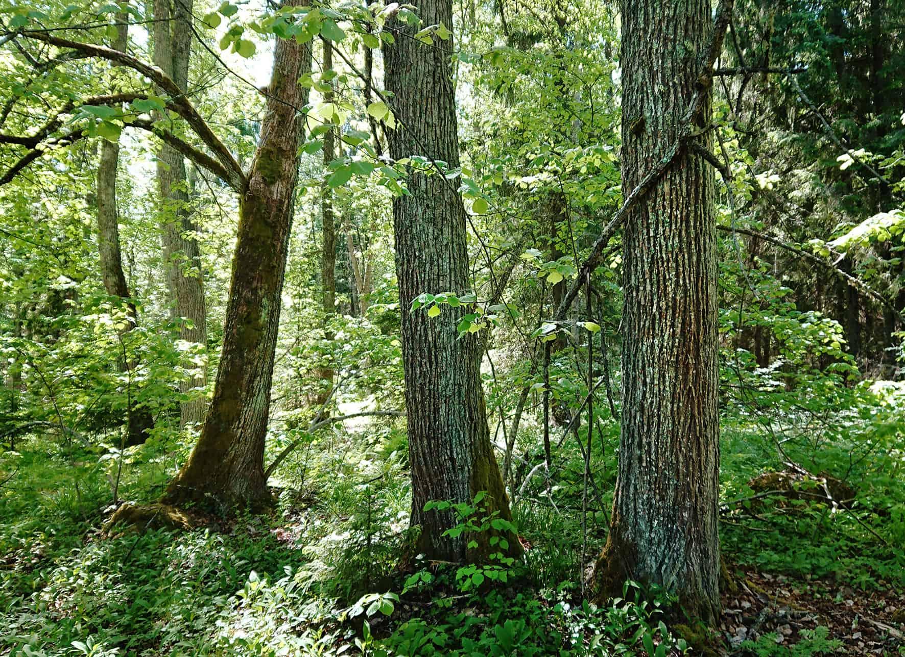 Luonnonperintösäätiön suojelualue Kukkialehto