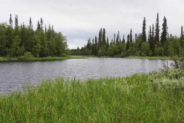 Kuusimukan tuleva suojelualue rajoittuu lännessä Ivalojoen vanhaan uomaan, Viekkalanjärviin. Kuva Ari-Pekka Auvinen.