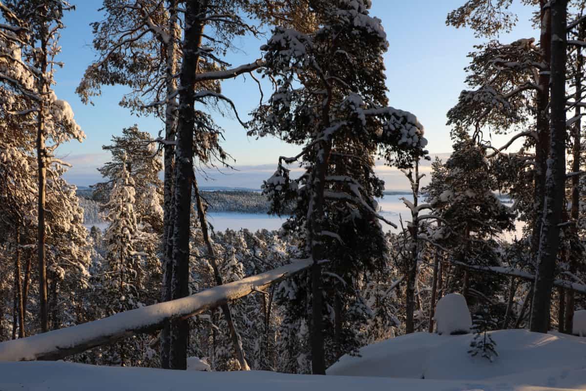 Čáháligvääri Maahisenvaara Luonnonperintösäätiö Luonnonsuojelualue Inari