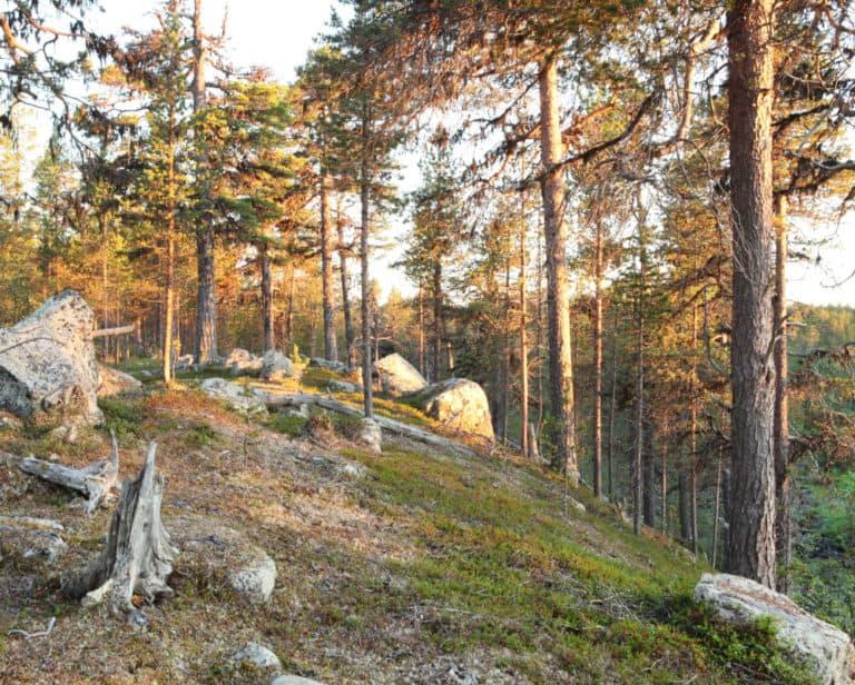 Luonnonperintösäätiö Tsiuttajoki Luonnonsuojelualue