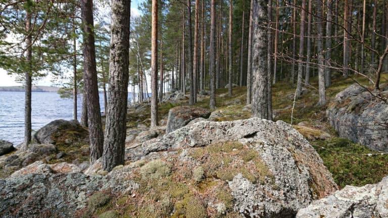 Viitasaaren Aittosaari. Kuva: Anneli Jussila.