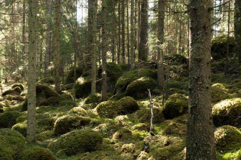 Kaunilanmaa suojelualue Luonnonperintösäätiö
