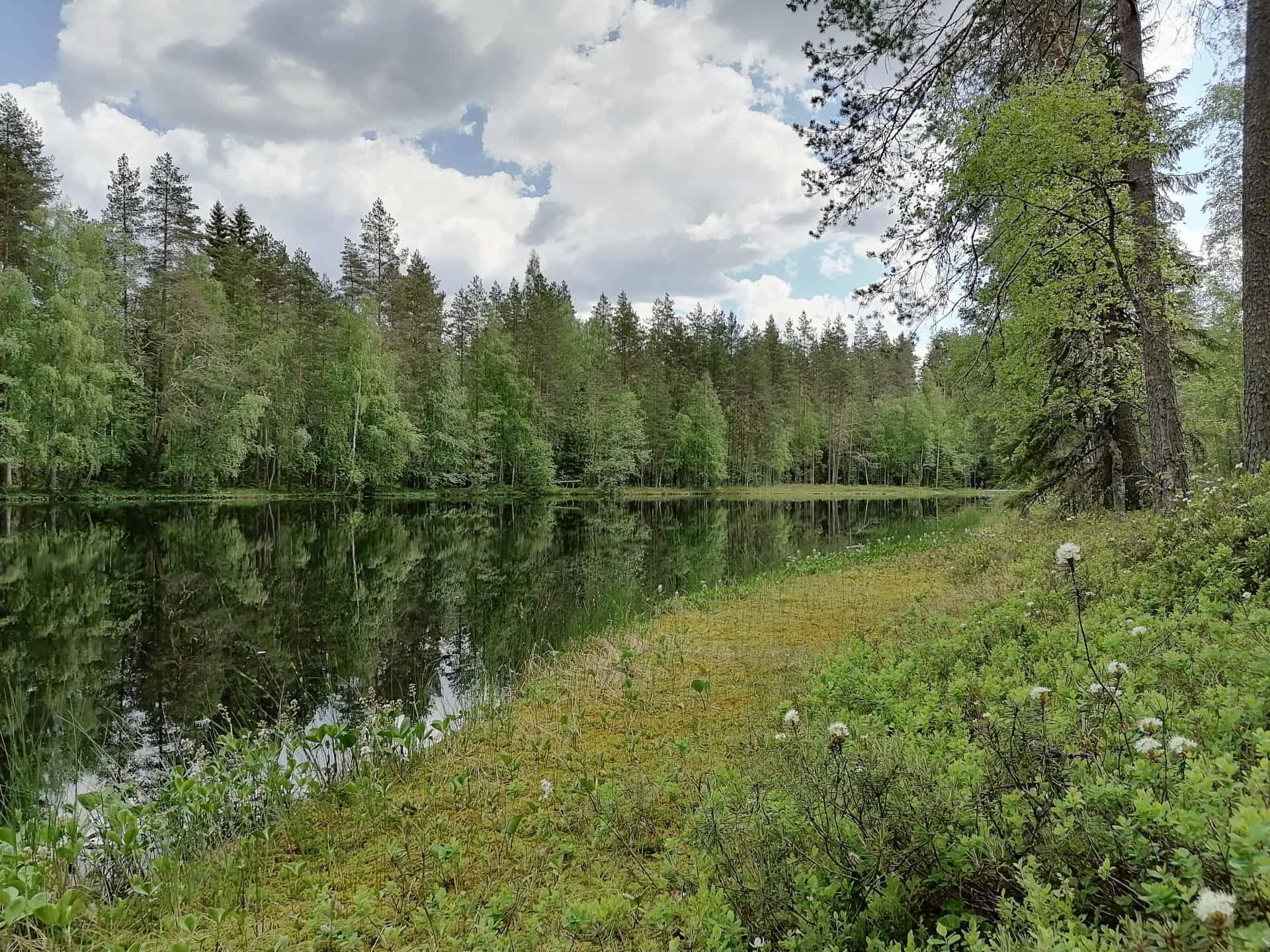 Pentti Linkolan muistometsä Luonnonperintösäätiö